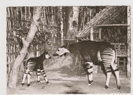 A Travers Le Congo ... Okapi, Congo Belga - F.G. - Anni '1950 - Congo Belge - Autres