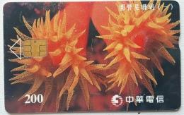 Taiwan Chip Card , Coral - Taiwan (Formosa)