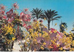 Nice - Carnaval - Bataille De Fleurs - Karneval