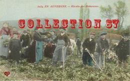 ☺♦♦ BETTERAVE < RECOLTE De BETTERAVES En AUVERGNE - AGRICULTURE CULTURE FERMIER  PAYSAN - PUBLICITE Au DOS - Cultivation
