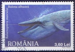 Used Romania 2007,Polar Animals - Blue Whale (Balaenoptera Musculus)1V. - 1948-.... Republics