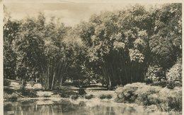 004692  Botanical Garden In Paradeniya  1933 - Sri Lanka (Ceylon)
