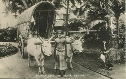 004696  Bullock Cart And Driver - Sri Lanka (Ceylon)