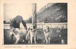65 - HAUTES PYRENEES / Bagnères De Bigorre - 65534 - Chien Des Pyrénées - Beau Cliché Animé - Bagneres De Bigorre
