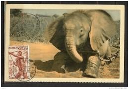 TCHAD UN JEUNE ELEPHANT - Tchad
