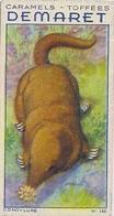 INSECTIVORES - CONDYLURE (TAUPE ÉTOITÉE) N° 146 - CARAMELS ET TOFFÉES DEMARET (1 IMAGE) - Confectionery & Biscuits