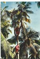 Nouvelle Caledonie Homme Percher - Nouvelle-Calédonie