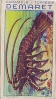 CRUSTACÉS - LANGOUSTE N° 71 - CARAMELS ET TOFFEES DEMARET (LOT DE 2 IMAGES) - Confectionery & Biscuits