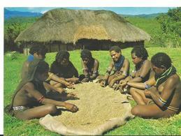 Nouvelle Guinea Meris Sorting  Coffe Beans Mont  Hagen - Papouasie-Nouvelle-Guinée