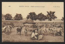 Haute Volta - Fidèles Serviteurs Au Repos - Burkina Faso
