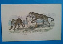 La Jaguar, La Panthère - Lithographies