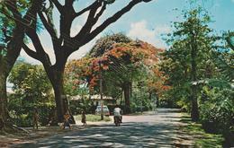[VD.19] RAROTONGA, Cook Islands, Mainroad At Tupapa. Postal Escrita Al Dorso / Carte écrite Au Dos [1972]. - Isole Cook