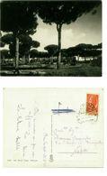 MINTURNO MARINA ( LATINA ) LA PINETA - ED. MORELLI - 1955 (2424) - Latina