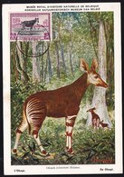 MAXIMUMKAART BELGIAN CONGO - CONGO BELGE - CARTE MAXIMUM -  Obl. 31.12.1950 OKAPI 20F - Congo Belge
