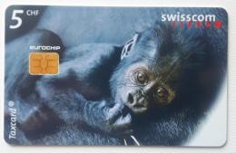 Gorilla Baby , Switzerland - Jungle