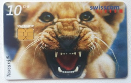 Lion  , Switzerland - Jungle