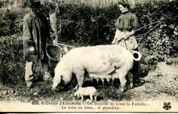 N°63764 -cpa Une Bonjour De Toute La Famille- Le Bébé Va Bien- - Cochons