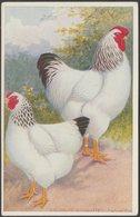 A F Lydon - Chickens, Columbian Wyandottes, C.1910 - Postcard - Birds