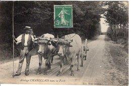 AGRICULTURE // BŒUFS //ATTELAGE CHAROLAIS DANS LA FORET -  EDITION LECERCLE - Teams