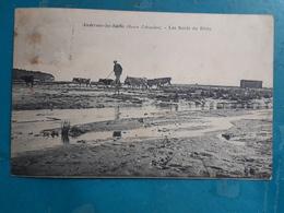 CPA - ANDERNOS-LES-BAINS - Les Bords Du Bétey - Animée: échassier, Vaches... - Andernos-les-Bains