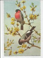 Couple De Bouvreuils Sur Une Branche De Forsythia. - Oiseaux