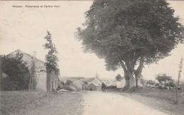 Souvenir De  Macon - Lez - Chimay , Panorama Et L'arbre Vert - Momignies