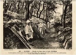 """COLLECTION  """"  Pour L'Enseignement Vivant """"  N° 207 -  ALGERIE  -  Récolte Du Liège Dans La Forêt D' EL-Miliah - Vieux Papiers"""