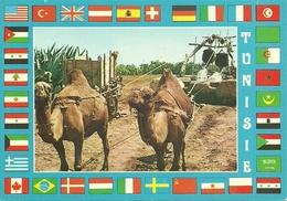 TUNEZ SOUVENIR ANTIGUO CAMELLOS - Túnez