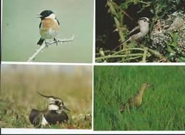 Lot  14 CPM Oiseaux Neuves TBE Voir Description Tout Scanné Le Lot Peut être Modifié Sur Demande - Oiseaux