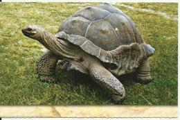Seychelles Giant Land Tortoise Michael Fayon Photo Eden - Seychellen