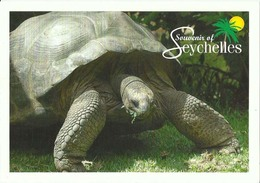 Seychelles Souvenir Giant Land Tortoise Jurien Palmyre - Seychellen