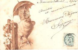 Thèmes - Fantaisies - Humour - Poussin ( Ou Poule ) à Tête De Poisson - CPA 1904 - Humour