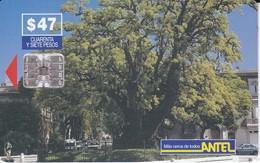 Nº 54 TARJETA DE URUGUAY DE ANTEL DEL ARBOL OMBU - Uruguay