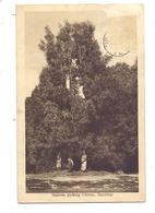 TANSANIA - ZANSIBAR, Natives Picking Cloves, 1929 - Tansania