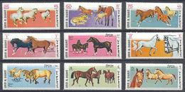 Umm Al-Qiwain 1969. Horses. Fauna. Animals.  MNH - Pferde
