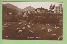 SOSPEL : Moutons Au Pâturage. 2 Scans. Edition CAP - Sospel