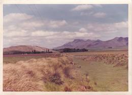 RECUERDO  DE PIGUE. VALLE CURA MALAL. AÑO 1980's. FOTO PHOTO SIZE 17x13cm- BLEUP - Places