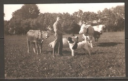 Carte P ( Les Vaches ) - Cows