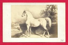Photographie Ancienne - Cliché Goupil à Paris - Alfred De Dreux - Thème Équitation - Photos