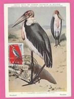 République Du Congo - Carte Maximum - Oiseaux - Marabout - Léopoldville 1963 - Premier Jour - République Du Congo (1960-64)