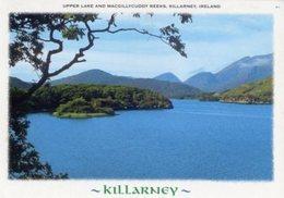 Killarney - Cartolina UPPER LAKE AND MACGILLYCUDDY REEKS - P65 - Kerry