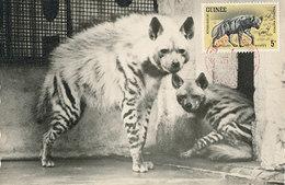 D34609 CARTE MAXIMUM CARD 1962 GUINEE - HYENA CP ORIGINAL - Girafes