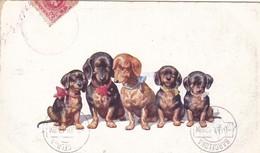 Dackel Teckel Dachshund Chien K.Feiertag  Cpa. Old Dog Postcard. BKWI. 706-2 - Chiens