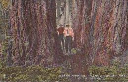 "USA        339        See Washington First "" Pillars "" Of Herculor Near Sol Duc Hot Srings. - Seattle"