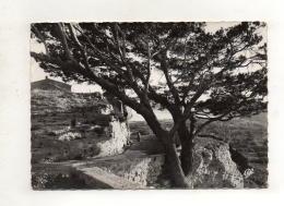 (13) MIRAMAS-le-Vieux - Vue Sur L'étang De Berre (coté Sud) - Francia