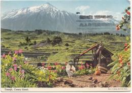 Spain, Espana, Tenerife, Canary Islands, 1978 Used Postcard [21525] - Tenerife