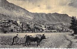 ANDORRA Andorre ( Scène De Vie ) Paysan Labourant Son Champ Avec Un Boeuf -  CPSM Dentelée Format CPA - - Andorra