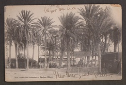 Palmtree Oasis, Jardin D'Essai, Algiers - Used - Tiny Tear & Wear - Algeria