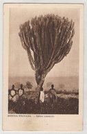 0176 Africa  Zimbabwe Southern Rhodesia Poland Mission 2 Kaktus - Zimbabwe