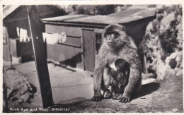 GIBRALTER - ROCK APE AND BABY - Monkeys